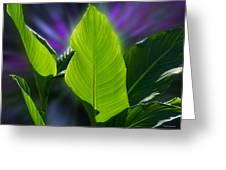 Big Leaves Greeting Card
