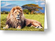 Big Lion Lying On Savannah Grass Greeting Card