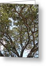 Big Oak Tree Greeting Card