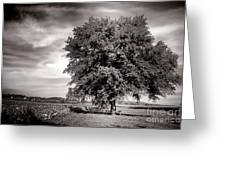 Big Old Tree Greeting Card by Olivier Le Queinec