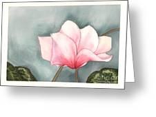 Big Pink Cyclamen Greeting Card