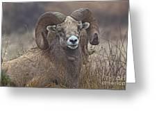 Big Rams Greeting Card