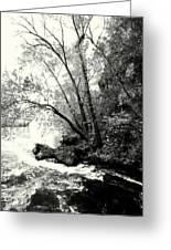 Big Spring In B And W Greeting Card