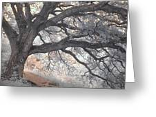 Big Sur Oak Greeting Card