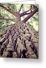 Big Tree Bark Greeting Card
