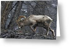 Bighorn Caught In A Blizzard Greeting Card