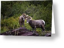 Bighorn Ram 4 Greeting Card