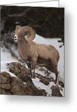Bighorn Ram In Snow Greeting Card
