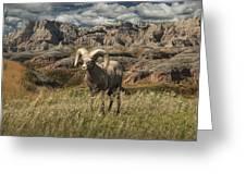 Bighorn Ram In The Badlands Greeting Card