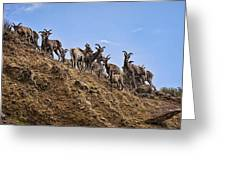 Bighorn Sheep At Blue Mesa Reservoir Greeting Card