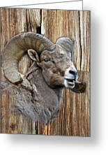 Bighorn Sheep Barnwood Greeting Card