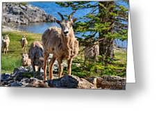 Bighorn Sheep Of Lake Minnewanka Greeting Card