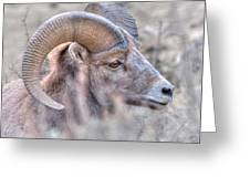 Bighorn Soft Greeting Card