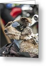 Biker Dog Greeting Card