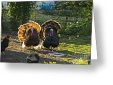 Bill And George Greeting Card