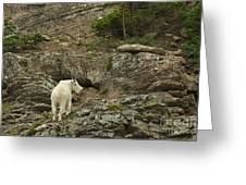Billy Goat 3 Greeting Card