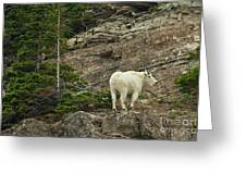 Billy Goat 4 Greeting Card