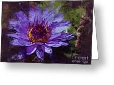 Biltmore Estate Water Lily Garden #2 Greeting Card