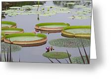 Biltmore House Water Garden Greeting Card