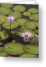 Biltmore Water Lillies Greeting Card