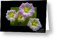 Bindweed Greeting Card