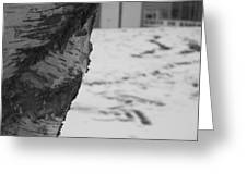 Birch Bark And Snow In Black And White Greeting Card