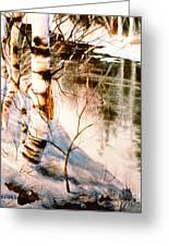 Birch By Stream Greeting Card
