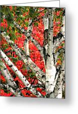 Birch Eclipsing Maple Greeting Card