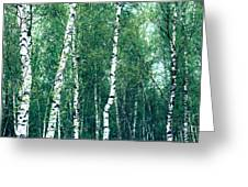 Birch Forest - Green Greeting Card