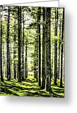 Birch Forest Fractal Greeting Card