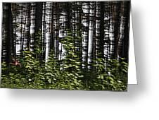 Birch Illusion Greeting Card