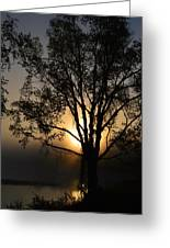 Birch In Silhouette Greeting Card