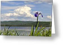 Birch Lake Iris Greeting Card