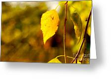 Birch Leaves Greeting Card