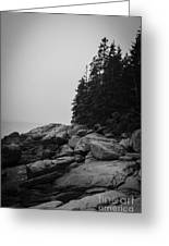 Birch Point Black And White Greeting Card