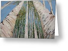 Birch Tree 2 Greeting Card
