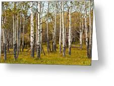 Birch Tree Grove No. 0126 Greeting Card
