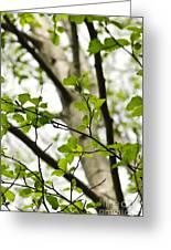 Birch Tree In Spring Greeting Card