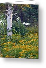 Birch Tree Greeting Card