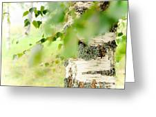 Birch Tree. The Soul Of Russian Nature Greeting Card