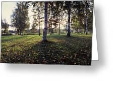 Birch Trees, Imatra, Finland Greeting Card