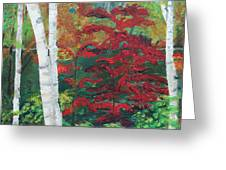 Birch Trees In Red Greeting Card
