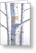 Birch Trees In Three Greeting Card