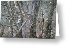 Birch Trees Winter Ashover Greeting Card