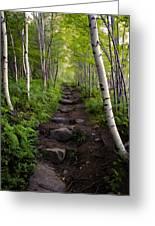 Birch Woods Hike Greeting Card