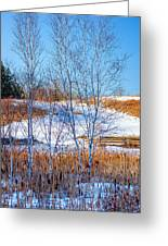 Birches And Cattails Greeting Card