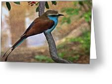 Bird 6 Greeting Card