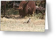 Bird Alert Greeting Card