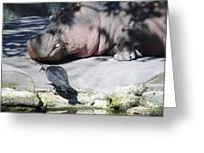 Bird And Hippo Greeting Card