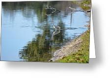 Bird And Pond Greeting Card